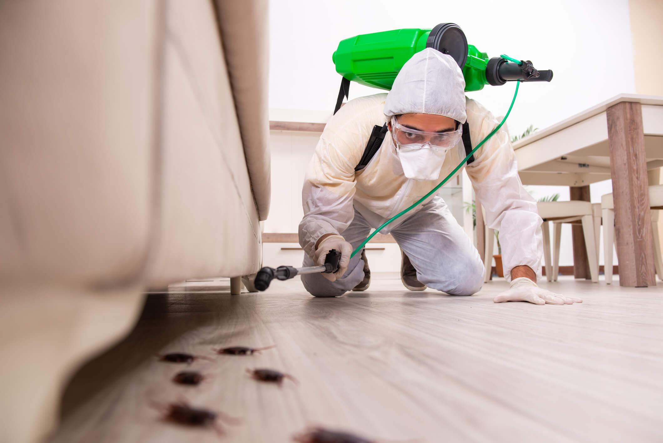Expert Pest Control Advantages
